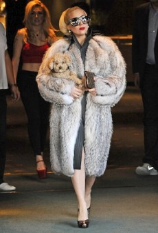 Lady Gaga Fame-Whores Her Puppy, Channels Cruella de Vil