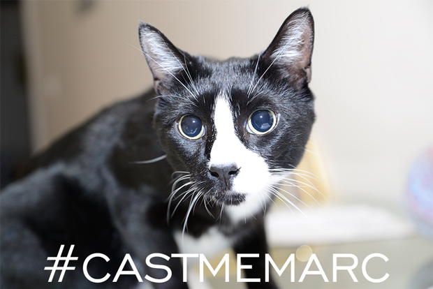 Carl the Cat CASTMEMARC photo for Marc Jacobs instagram and twitter campaign