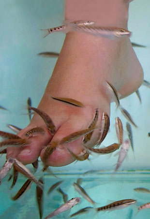 fish-pedicure-p