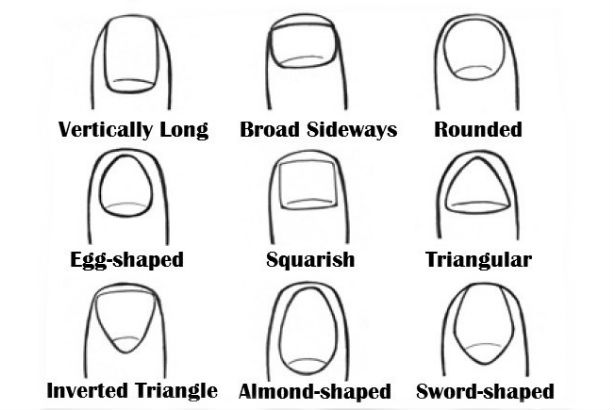 image showing different nail types/styles