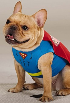 It's a Bird, It's a Plane, It's Superdog! PetSmart's New Dog Halloween Costumes Debut