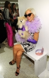 A Purple Feather Boa, Elbow-Length Satin Gloves and a Pomeranian