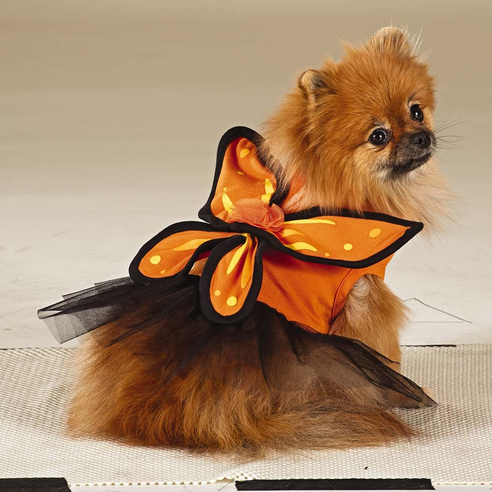 Butterfly Dog