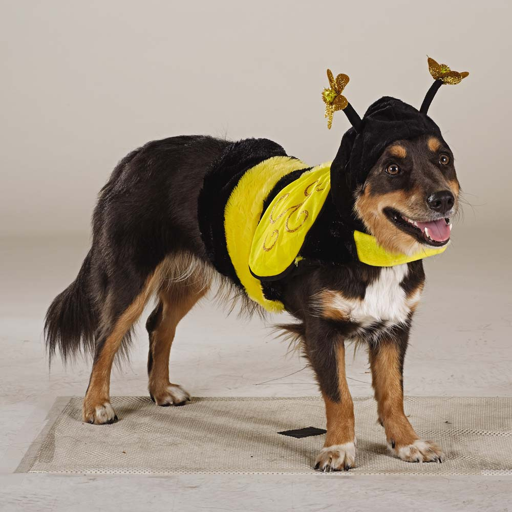 Bee Puppy
