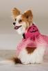 Pink Pumpkin Pooch