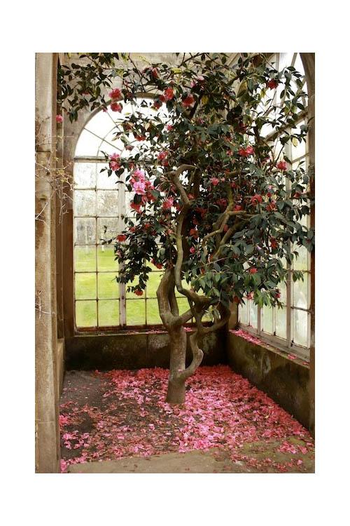 That's an Indoor Tree