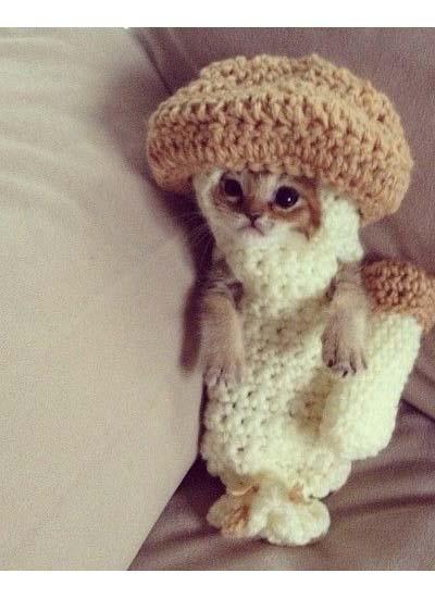 Mushroom Kitten