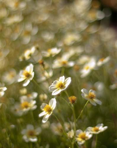 A Field of Winter Flowers
