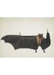 The Spooky Bat