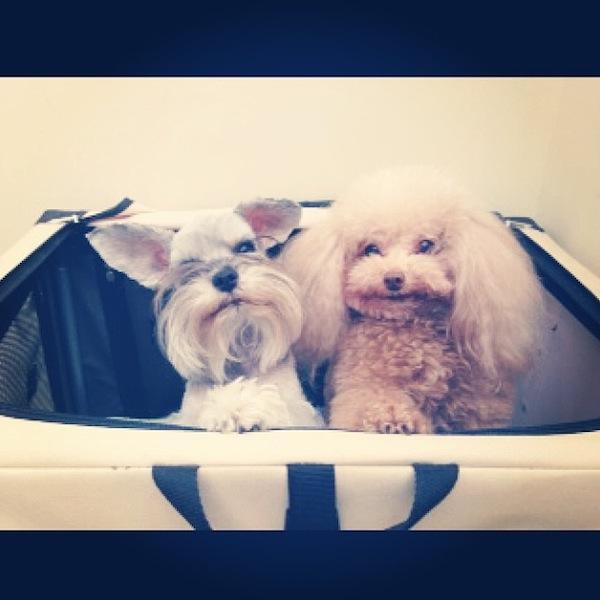 Ciara Packs a Doggy Bag