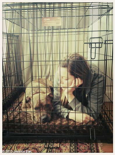 Jessica Biel Is in the Doghouse