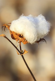 What's (Not) Growing in Your Backyard? California Cotton is Having a Tough Year