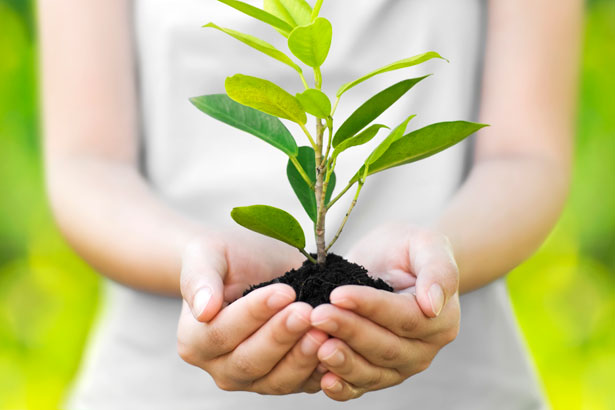 woman's hands holding a seedling
